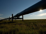 Alaska Pipeline, North Slope, Alaska Photographic Print by Michael S. Quinton