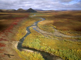 Fall Color on the Central North Slope of Alaska, North Slope, Alaska Photographic Print by Joel Sartore