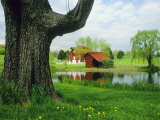 Tree Frames a View of a Farm Reflected in a Pond, Virginia Fotografie-Druck von Annie Griffiths Belt