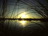 Sunrise Thru the Rushes at Market Lake, Idaho, Market Lake Wildlife Refuge, Idaho Photographic Print by Michael S. Quinton