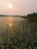 Sun and Reflection in a Lake with Grasses, Alaska Photographic Print by David Edwards