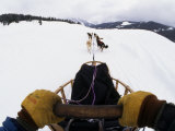 Musher Sledding with a Team of Dogs, Jackson Hole, Wyoming Photographic Print by Kate Thompson