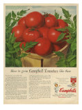 Campbell&#39;s, Magazine Advertisement, USA, 1950 Posters