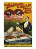 Barnum and Bailey, Poster, 1900 Giclée-tryk