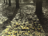 Expanse of Dry Leaves Along a Tree-Lined Street in Autumn Photographic Print by Vincenzo Balocchi