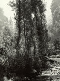 View of a Forest with a Stream Photographic Print by Vincenzo Balocchi
