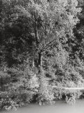 Woods Crossed by a River Photographic Print by Vincenzo Balocchi