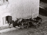 Carriage Pulled by a Mule Photographic Print by Vincenzo Balocchi