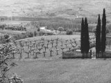 Cemetery and Fruit-Tree Plantation Near Vespignano Photographic Print by Vincenzo Balocchi