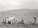 Ploughing Photographic Print by Vincenzo Balocchi