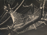 Spider's Web Amongst the Branches of a Tree Photographic Print by R. Zorno