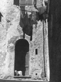 Cat and Laundry Hanging on a Street in Siena Fotografie-Druck von Vincenzo Balocchi