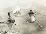Four Empty Water Flasks Floating in a Pool of Water, Partially Submerged in the Mire Photographic Print by Vincenzo Balocchi