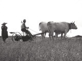 Life in the Fields Photographic Print by Vincenzo Balocchi