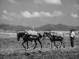 Farmer with Horses Photographic Print by Vincenzo Balocchi