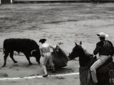 Toreador is Facing a Bull at the Center of a Bullfight Photographic Print by Vincenzo Balocchi