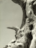 Weather-Beaten Tree Trunk Photographic Print by Vincenzo Balocchi
