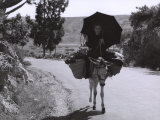 Elderly Woman on a Mule Photographic Print by Vincenzo Balocchi