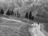 Returning from the Fields Photographic Print by Vincenzo Balocchi
