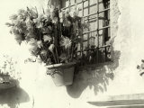 Vase with Flowers Hanging from the Window of an Old House Photographic Print by Vincenzo Balocchi