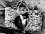 Kitten Sleeps on a Straw Purse Photographic Print by Vincenzo Balocchi