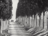 Country Road with Cypresses Photographic Print by Vincenzo Balocchi
