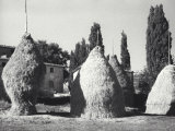 Hay Sheaves Photographic Print by Vincenzo Balocchi