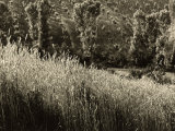 View of a Rural Agricultural Zone Corn Field Photographic Print by Vincenzo Balocchi