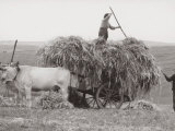 Harvesting in Hay in Tuscany Photographic Print by Vincenzo Balocchi