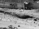 Kids and Donkey Along a River Photographic Print by Vincenzo Balocchi