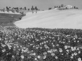 Sunflower Field Photographic Print by Vincenzo Balocchi