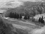 Cypress Photographic Print by Vincenzo Balocchi