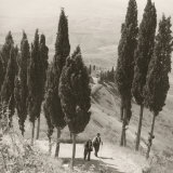 Cypresses Photographic Print by Vincenzo Balocchi