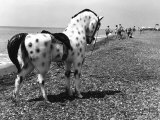 Toy Pony on the Beach Photographic Print by Vincenzo Balocchi