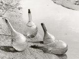 Flasks Photographic Print by Vincenzo Balocchi