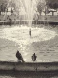 Pigeons on the Edge of a Fountain Photographic Print by Vincenzo Balocchi