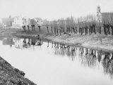Rows of Trees Along the Embankment of a River Photographic Print by Luciano Ferri