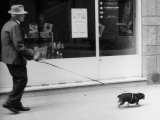Man Taking His Little Dog Out for a Walk Photographic Print by Vincenzo Balocchi
