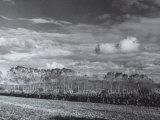 Landscape in Bolgheri, 1958 Photographic Print by Vincenzo Balocchi