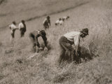 Grass Cutters in Montepiano Photographic Print by Vincenzo Balocchi