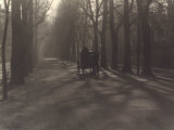 Carriage on a Tree-Covered Street Photographic Print by Vincenzo Balocchi