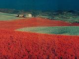 Landscape Photographic Print by Vincenzo Balocchi