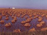 Rice-Field, Valencia, 1963 Photographic Print by Vincenzo Balocchi
