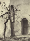 Country Doorway with Tree Photographic Print by Vincenzo Balocchi