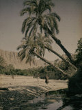 Oasis at Al Kantara, Tunisia Photographic Print by Henrie Chouanard