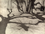 Shadows of Trees Photographic Print by Vincenzo Balocchi