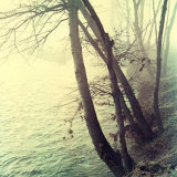 Tree Along a River in Foggy Weather During Autumn Photographic Print by A. Villani