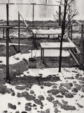 Structure of Wood in the Snow Photographic Print by Vincenzo Balocchi