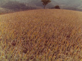 Field Photographic Print by Vincenzo Balocchi