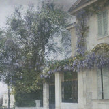 House with Wistaria in Bloom at Cannes Photographic Print by Henrie Chouanard